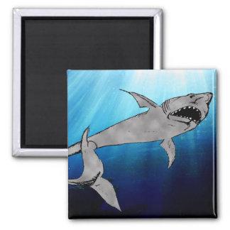 Tiburón Imán Cuadrado