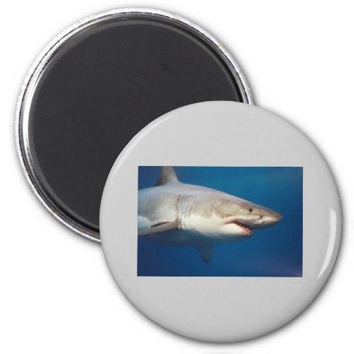 tiburón iman de frigorífico