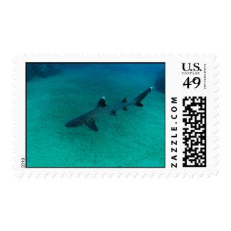 Tiburón impresionante en el profundo