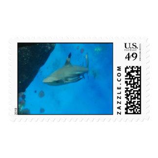 Tiburón inclinado pequeño negro