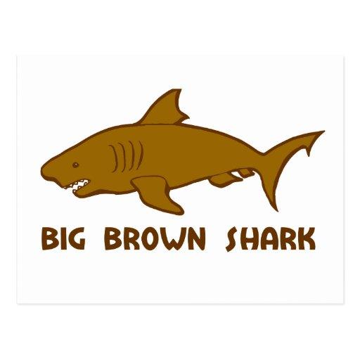 tiburón marrón grande tarjetas postales