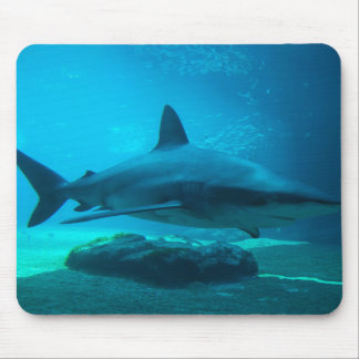Tiburón oscuro (Carcharhinus Obscurus), Ushaka Alfombrilla De Ratón