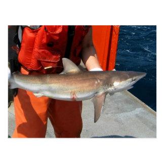 Tiburón oscuro postal