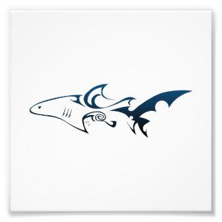 Tiburón Foto