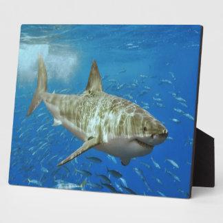Tiburón Placa De Plastico