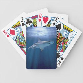 Tiburón que cruza baraja de cartas bicycle