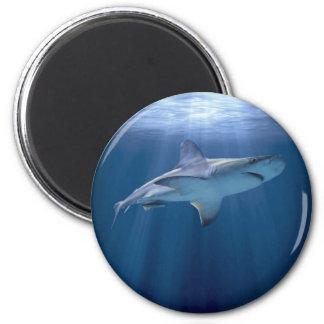 Tiburón que cruza imán redondo 5 cm