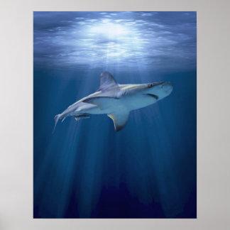 Tiburón que cruza poster