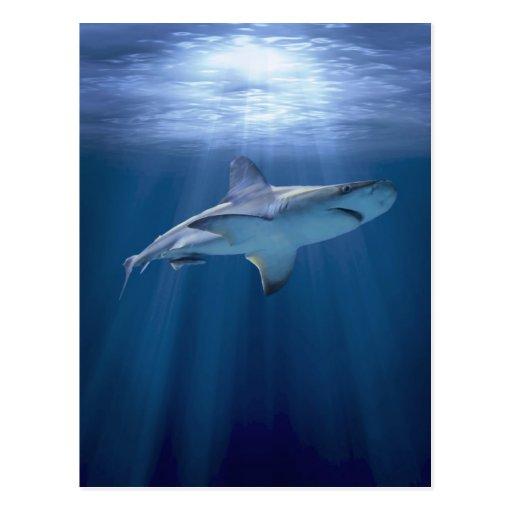 Tiburón que cruza postales