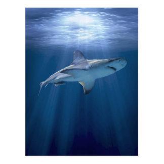 Tiburón que cruza tarjetas postales