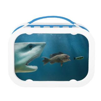 Tiburón que persigue la lubina que persigue al jov