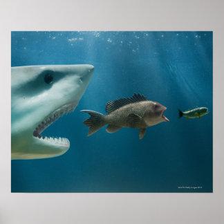 Tiburón que persigue la lubina que persigue al jov póster