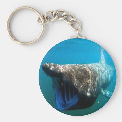 Tiburón que toma el sol llavero redondo tipo pin