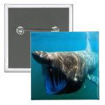 Tiburón que toma el sol pin cuadrada 5 cm