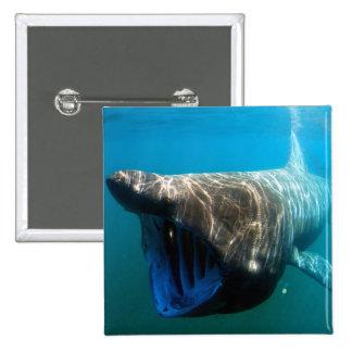 Tiburón que toma el sol pin cuadrado