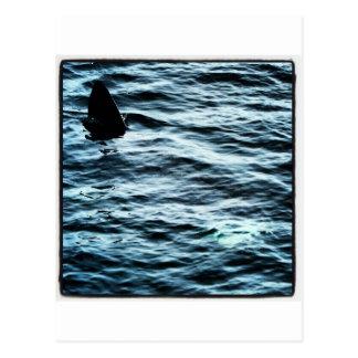 Tiburón que toma el sol tarjetas postales