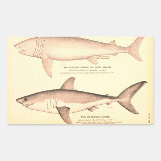 Tiburón que toma el sol y tiburón de caballa pegatina rectangular