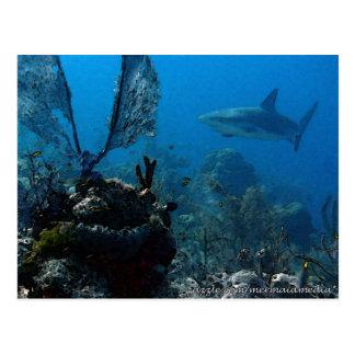 Tiburones bahameses del filón de la edición del tarjeta postal