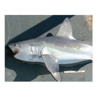 Tiburones de cogida postal