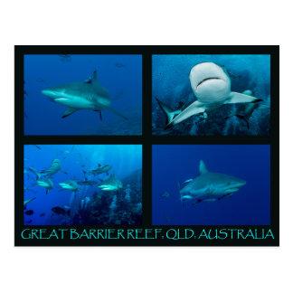 Tiburones del filón del mar de coral tarjeta postal
