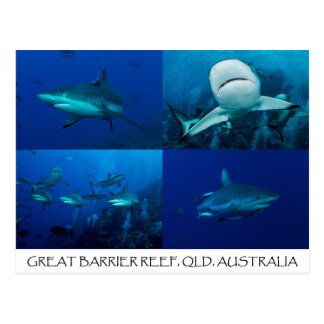 Tiburones del filón en la gran barrera de coral tarjetas postales
