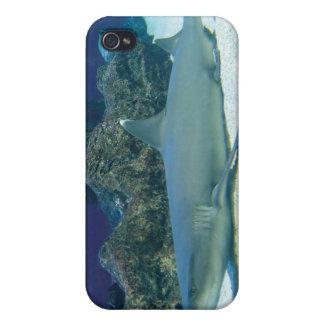 Tiburones en caso del iPhone 4 del arrecife de cor iPhone 4 Cárcasas