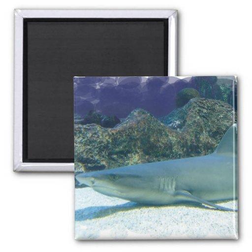 Tiburones en imán del arrecife de coral