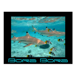 Tiburones en la postal de la laguna de Bora Bora