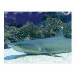 Tiburones en postal del arrecife de coral