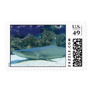 Tiburones en sello del arrecife de coral