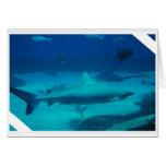 Tiburones Felicitaciones