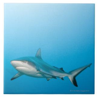 Tiburones grises del filón (amblyrhnchos del Carch Azulejo Cuadrado Grande