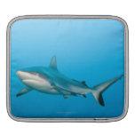 Tiburones grises del filón (amblyrhnchos del Carch Manga De iPad