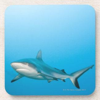 Tiburones grises del filón (amblyrhnchos del Carch Posavasos