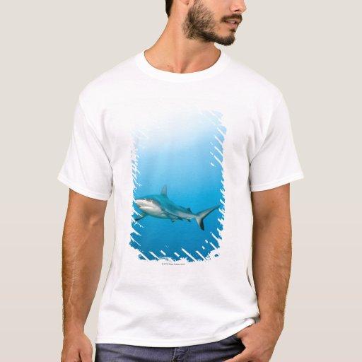 Tiburones grises del filón (amblyrhnchos del playera