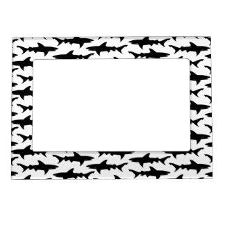 Tiburones - modelo blanco y negro elegante del tib marcos magneticos para fotos