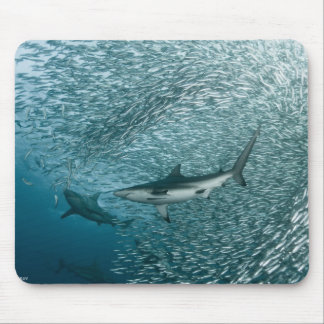 tiburones alfombrillas de ratones