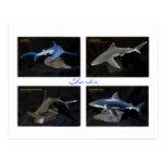 Tiburones Tarjetas Postales