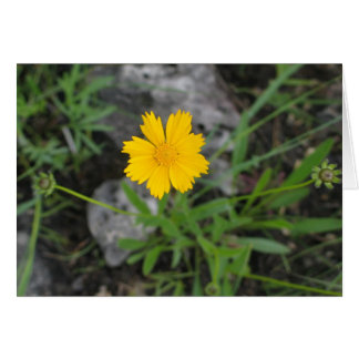 Tickseed Coreopsis Card