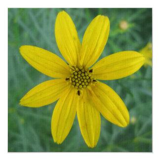 Tickseed Coreopsis Yellow Garden Flower Card