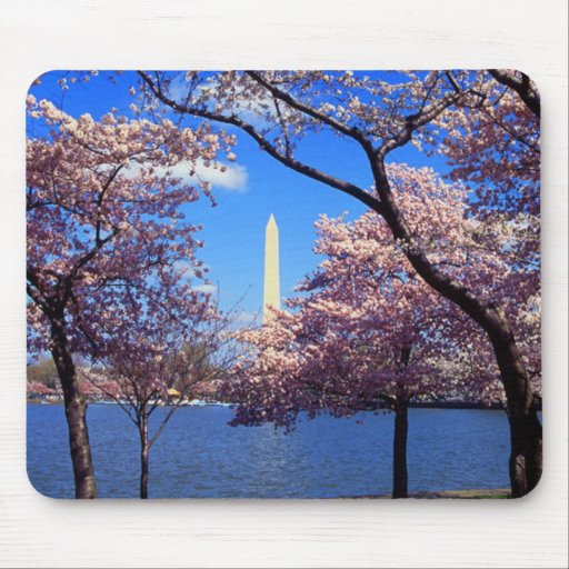 Tidal Basin Cherry Blossoms Mouse Pad