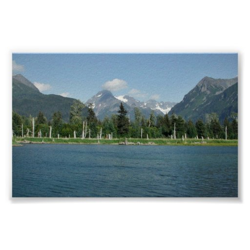 Tidal Pool and Spruce Poster