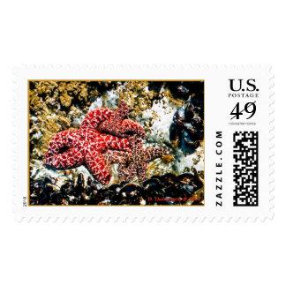 Tidal Pool Stamps