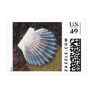 Tidal Pool Postage Stamp