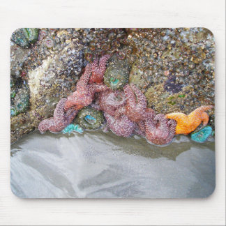 Tidal Pool, Ruby Beach, Olympic National Park Mouse Pad