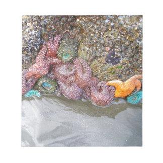 Tidal Pool, Ruby Beach, Olympic National Park Memo Notepad