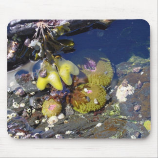 Tide Pool Party Mousepads
