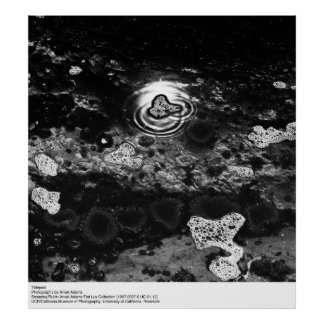 Tidepool, by Ansel Adams Poster