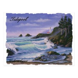 Tidepool Postcard