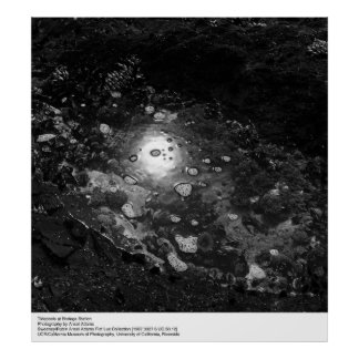 Tidepools at Bodega Station by Ansel Adams Poster